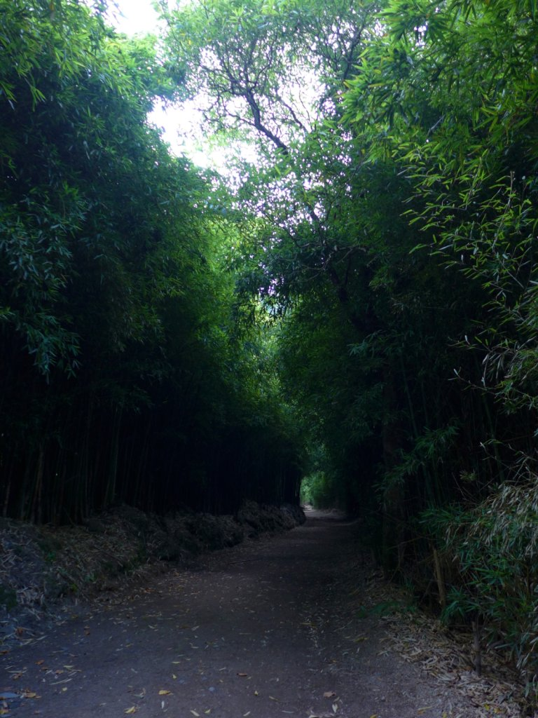 azores2013-povoacao-101.jpg