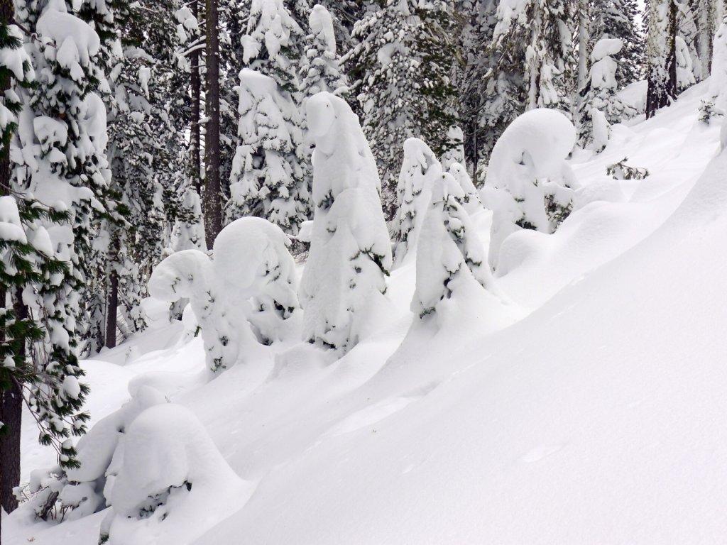 Winter Days at Hornero
