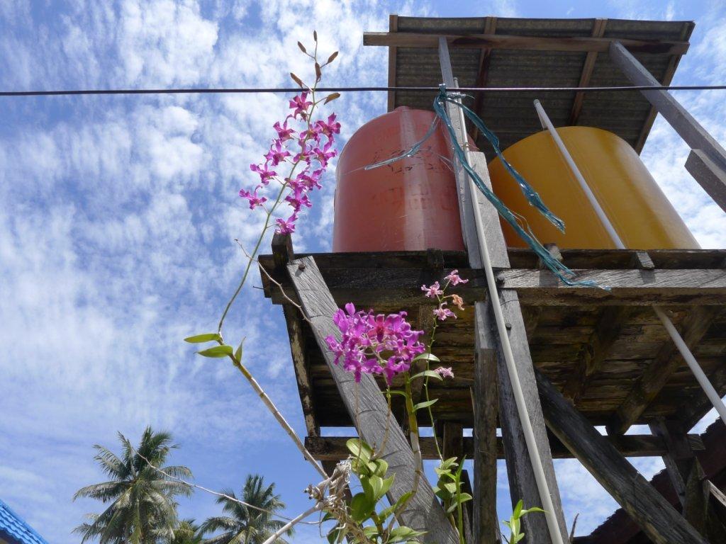 indo2012-derawan-048.jpg