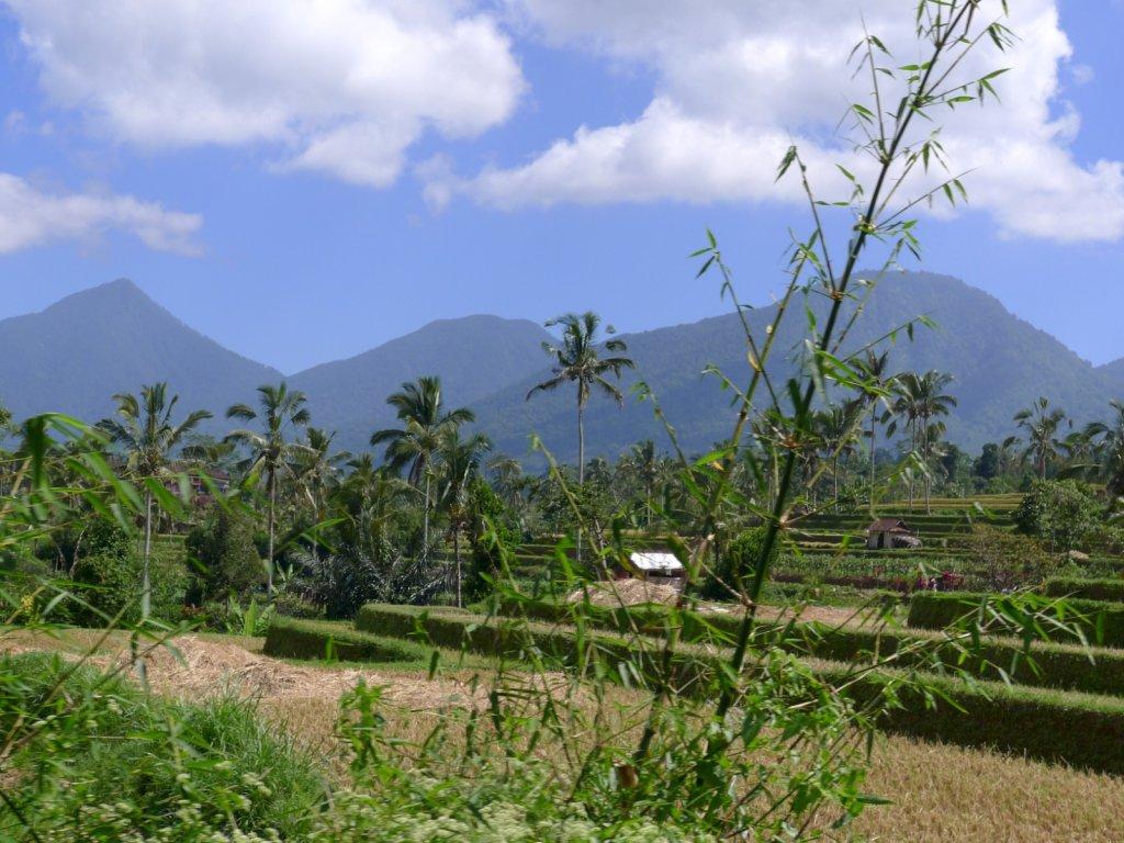 indo2012-bedugul-angseri-010.jpg