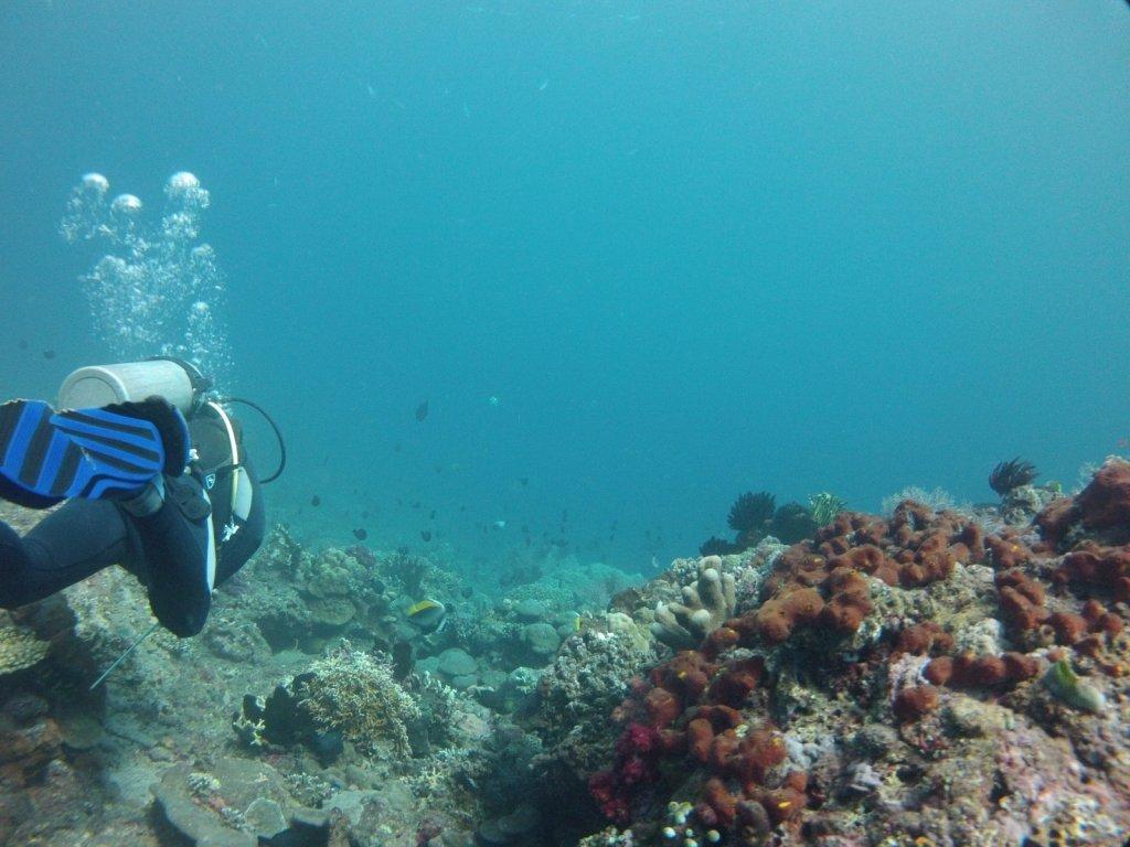 indo2012-amed-042.jpg