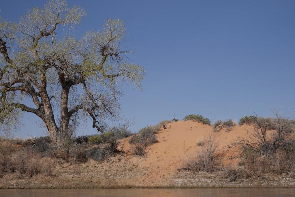 green-river-labrynith-canyon-master-86-of-446.jpg