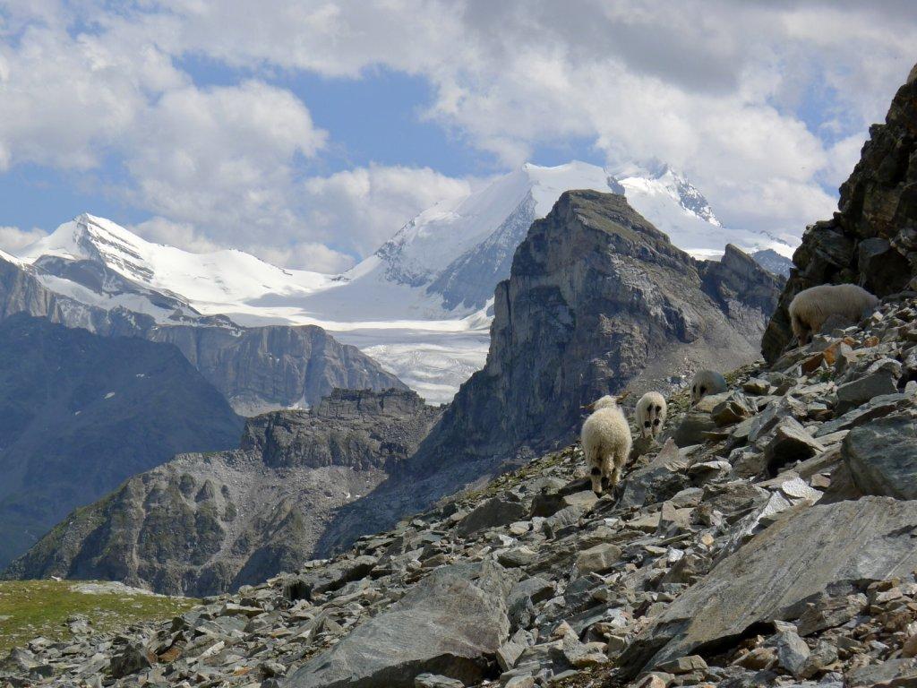 Skypacking the Alps - Switzerland