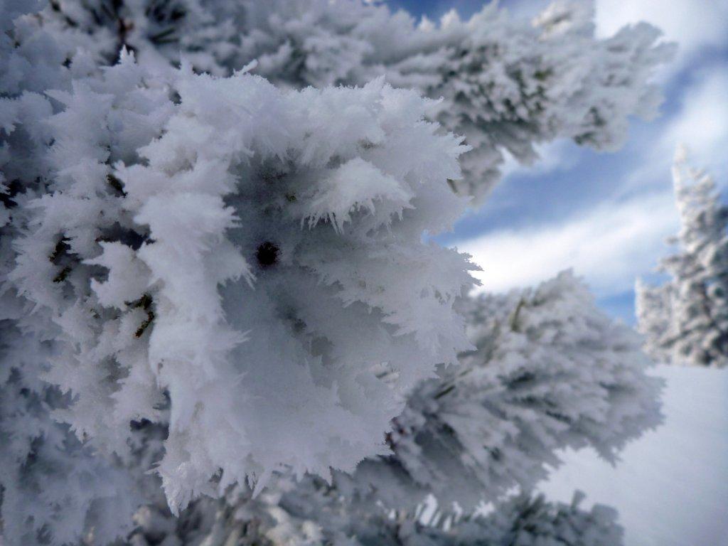 tahoe-2011-017.jpg
