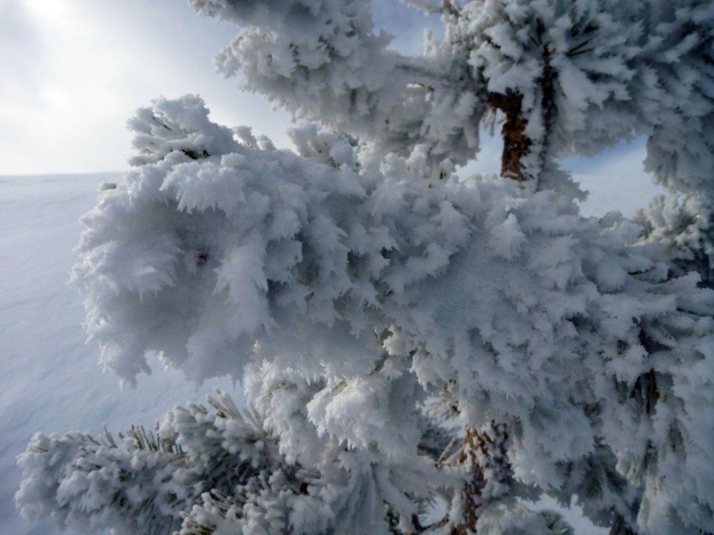 tahoe-2011-016.jpg