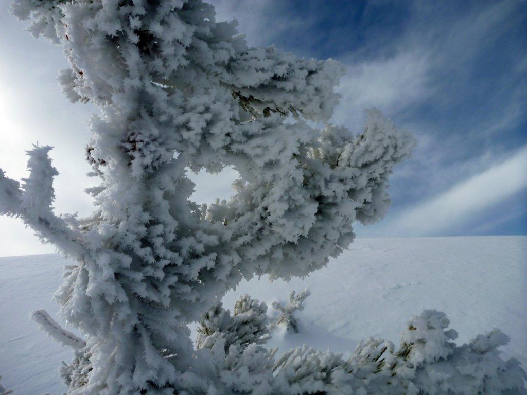 tahoe-2011-015.jpg