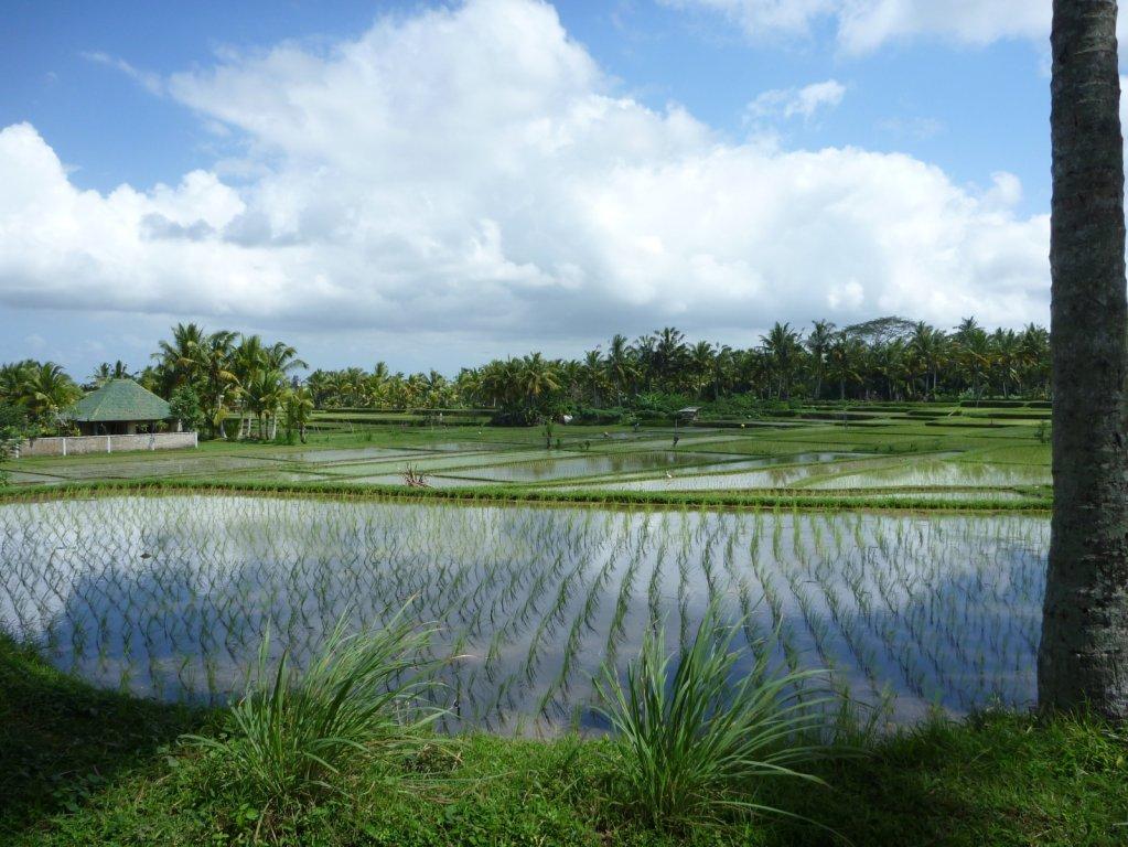 indonesia-ubud-030.jpg