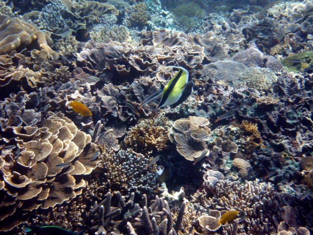 indonesia-lembongan-025.jpg