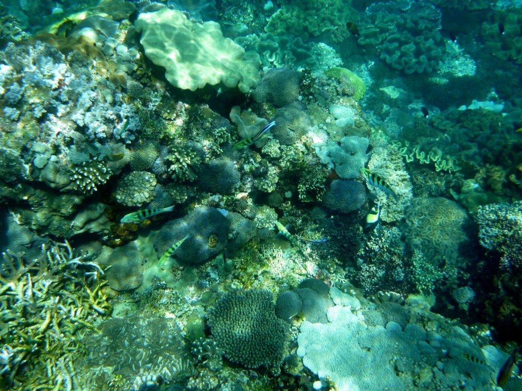 indonesia-lembongan-020.jpg