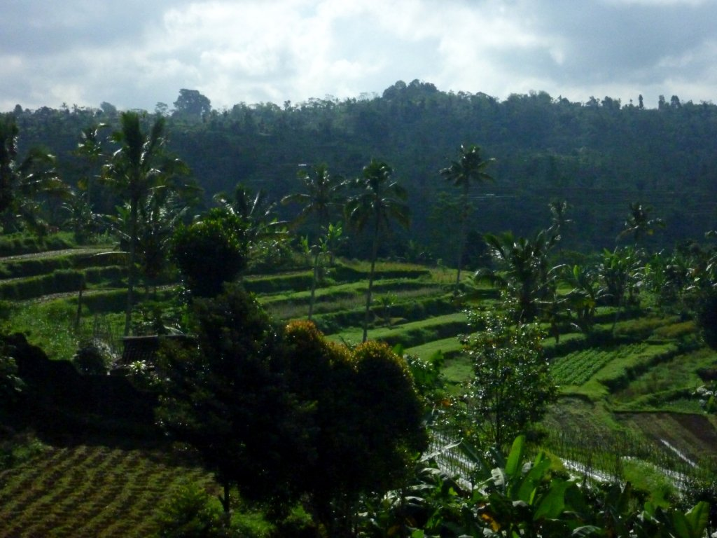 indonesia-bedugul-028.jpg