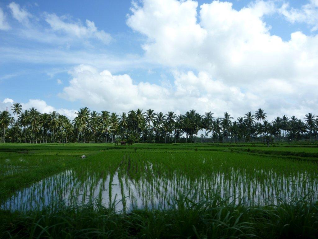 indonesia-bedugul-003.jpg