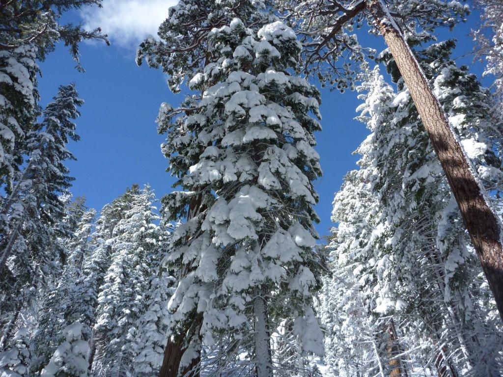 snow-months-2010-024.jpg