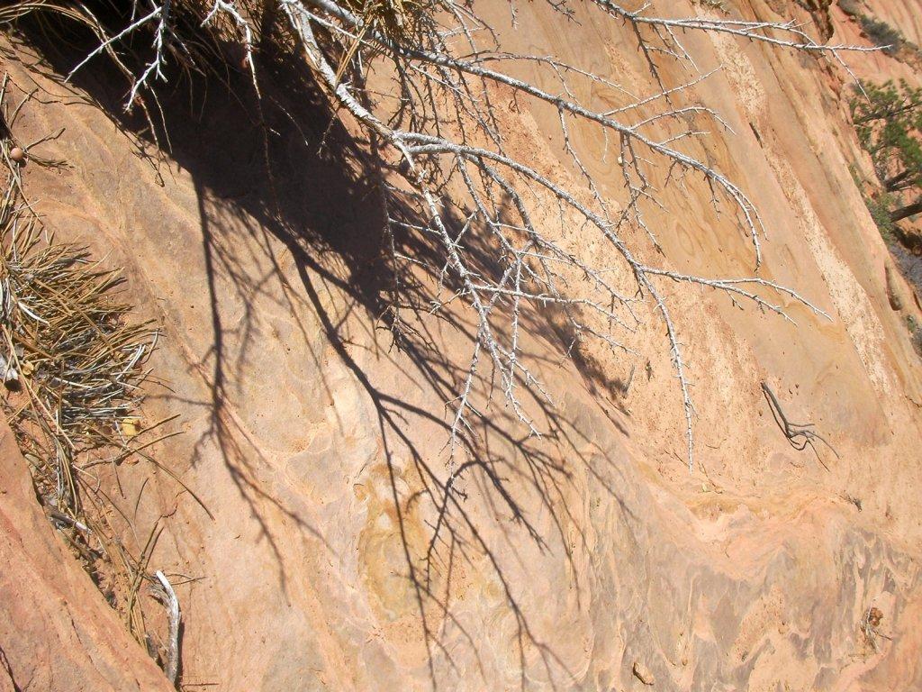 zion-canyoneering-2008-026.jpg