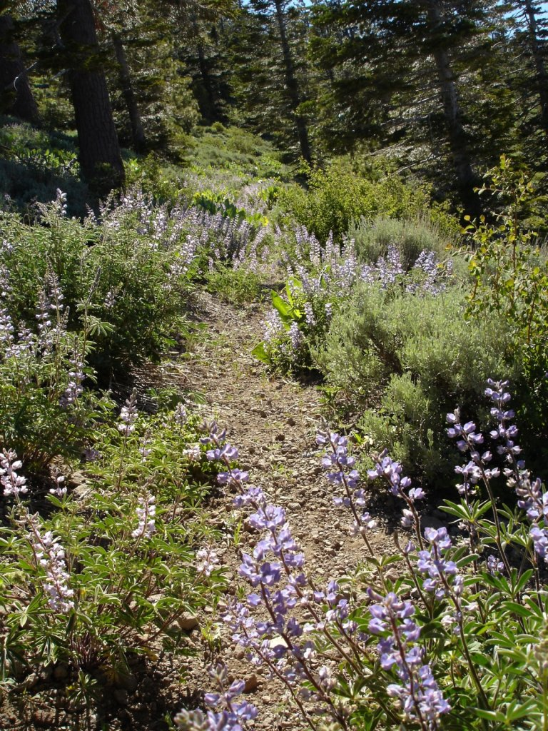pct2005-sierra-city-to-echo-lake-024.jpg