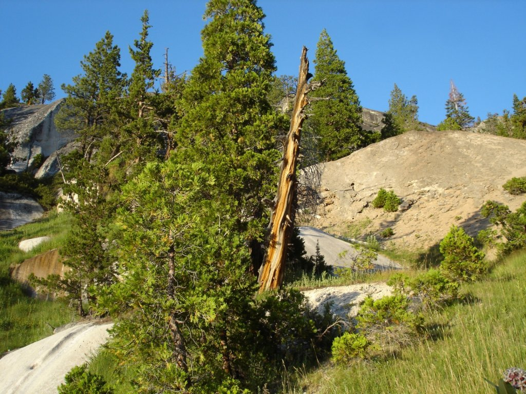 pct2005-reds-meadow-to-independence-015.jpg
